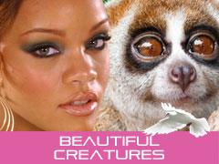 Rihanna and tslow loris bangla road